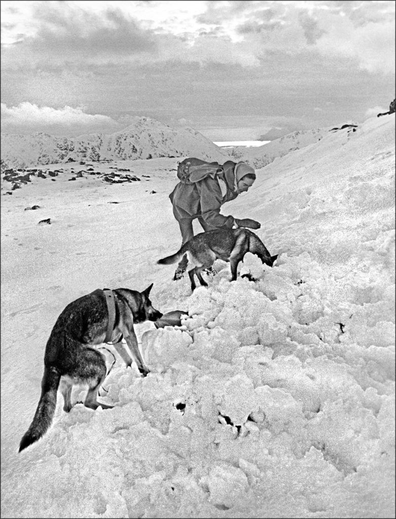 GLENCOE, Central Highlands : Two highly-trained Search and Rescue Dogs assist their handler - Dr. Catherine MacInnes - to locate a winter hill-walker buried in avalanche debris. ref: (1691/I/31a) ©JOHN.CLEARE/Mountain.Camera Picture Library