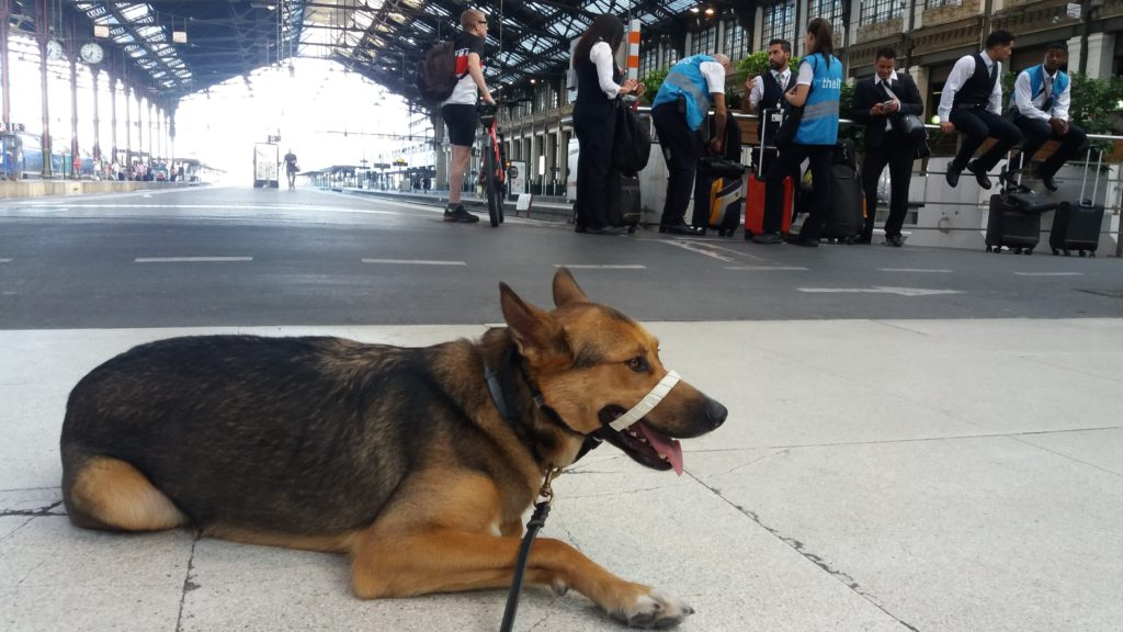 6.15 pm: Paris Gare de Lyon, resting and waiting for the Thello train.