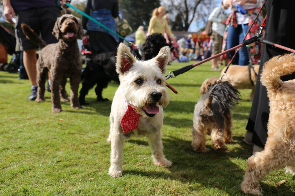 chiswick house dog show 2