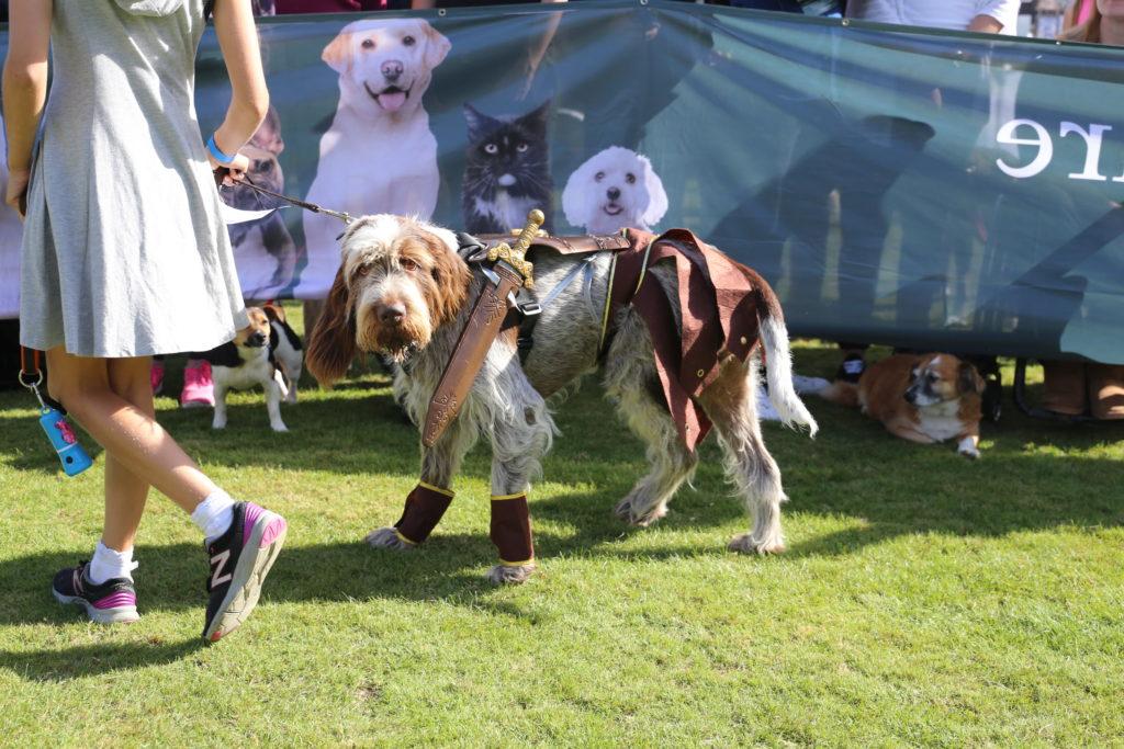 chiswick dog show gladiator