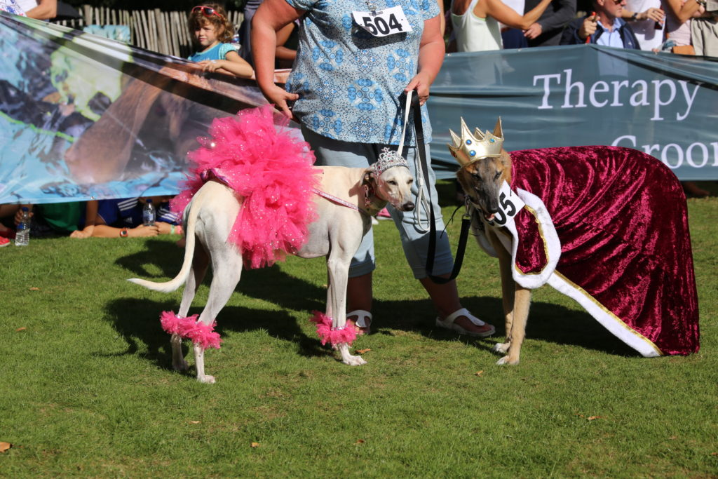 chiswick dog show kind and queen
