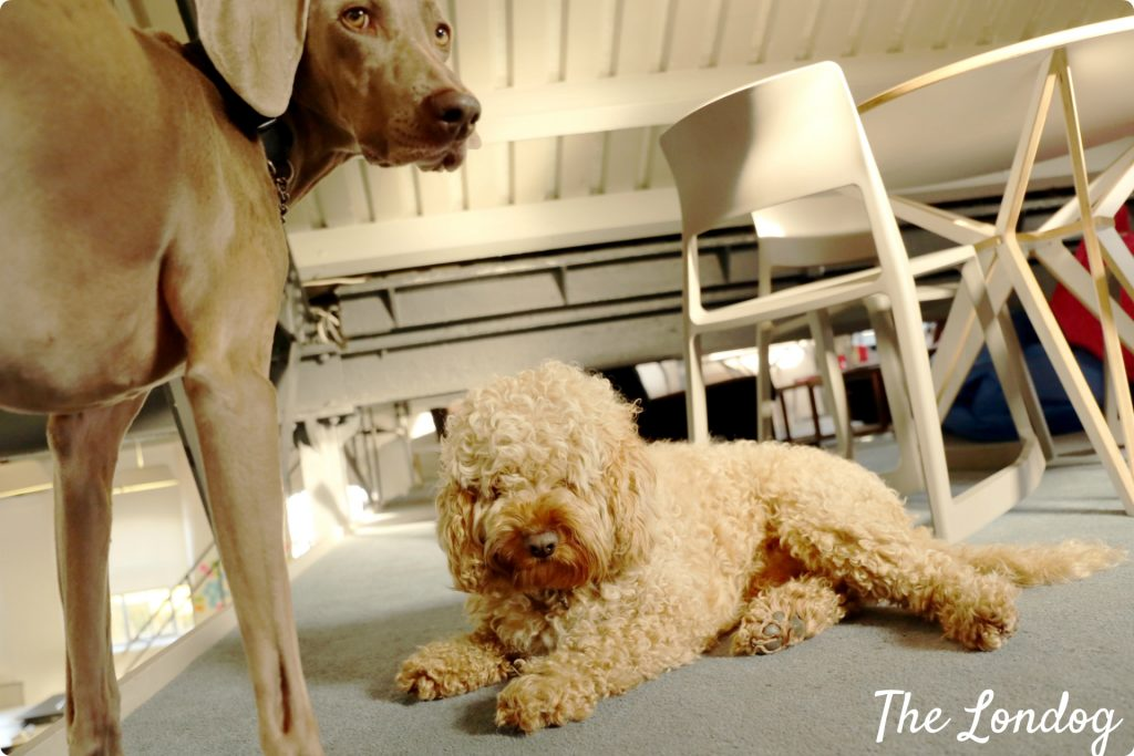 Bramble and Tilly