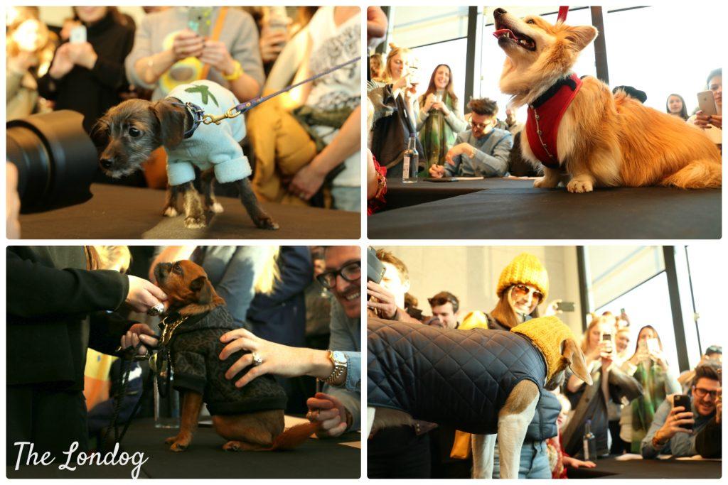 dogeatdog21