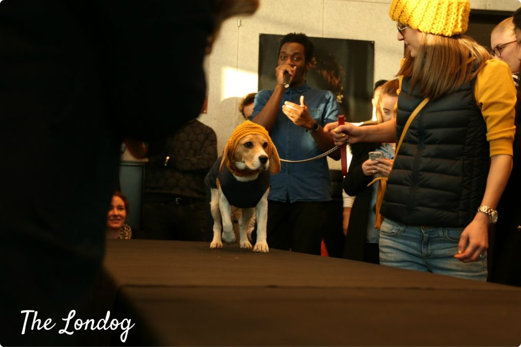 dogeatdog35