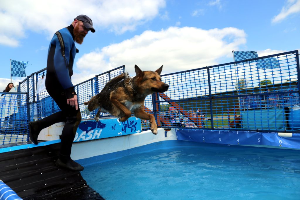 Dash_Splash_dog_fun