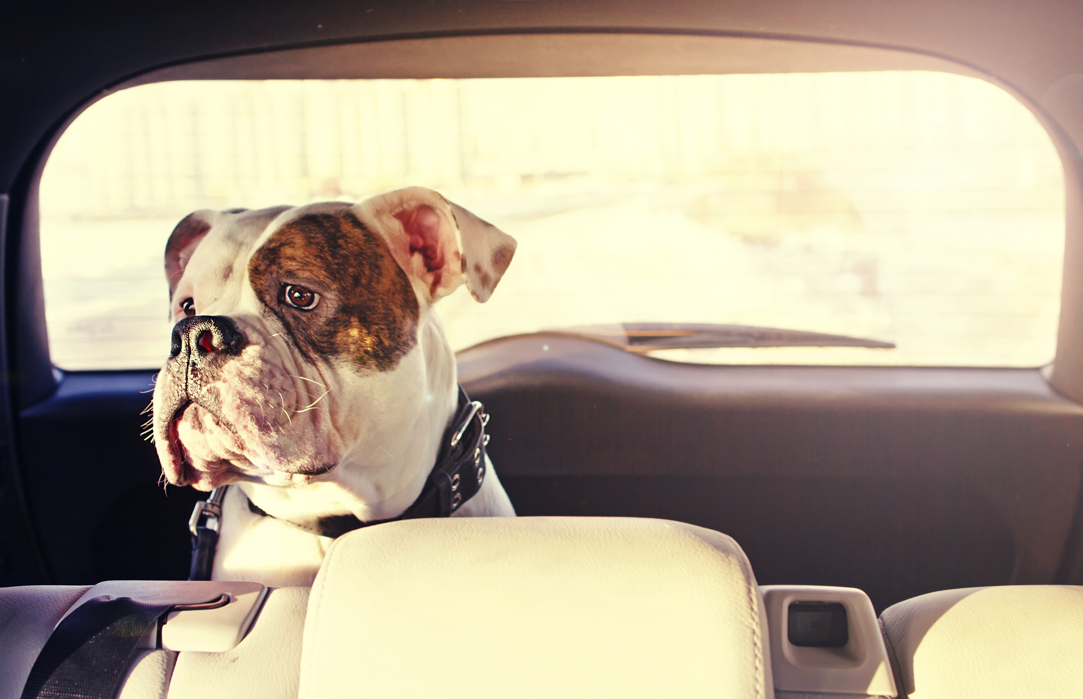 A dog trip to Europe: travel rules and approved routes | The