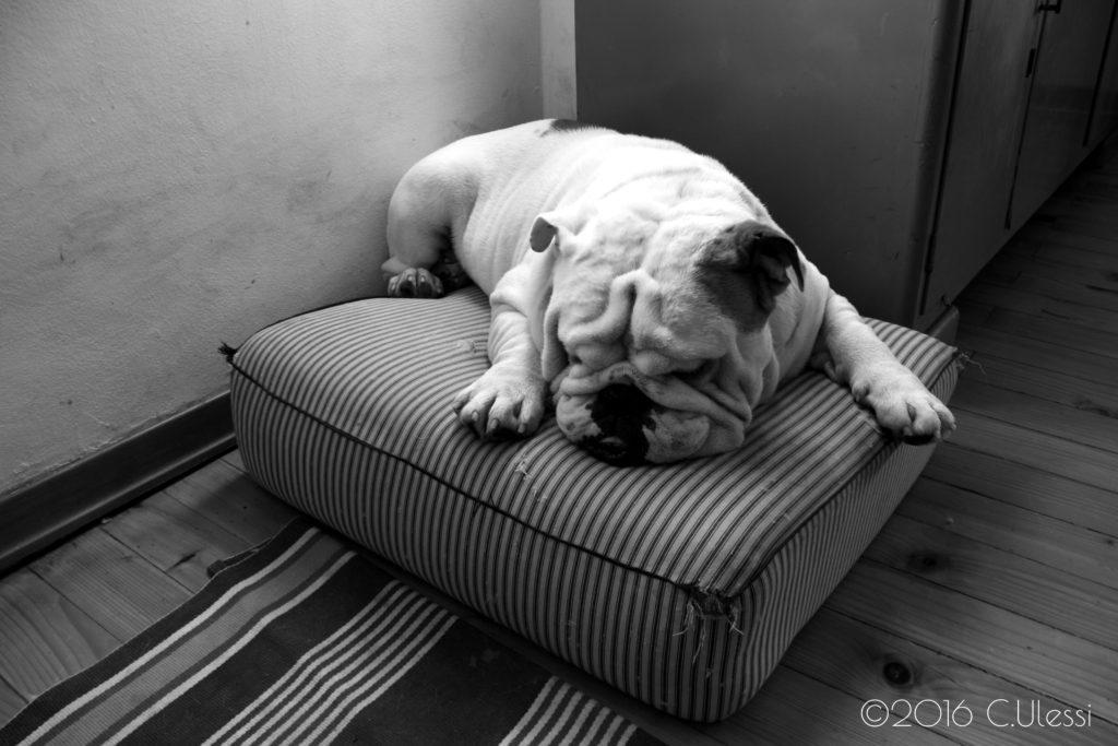 Winston-the-dog