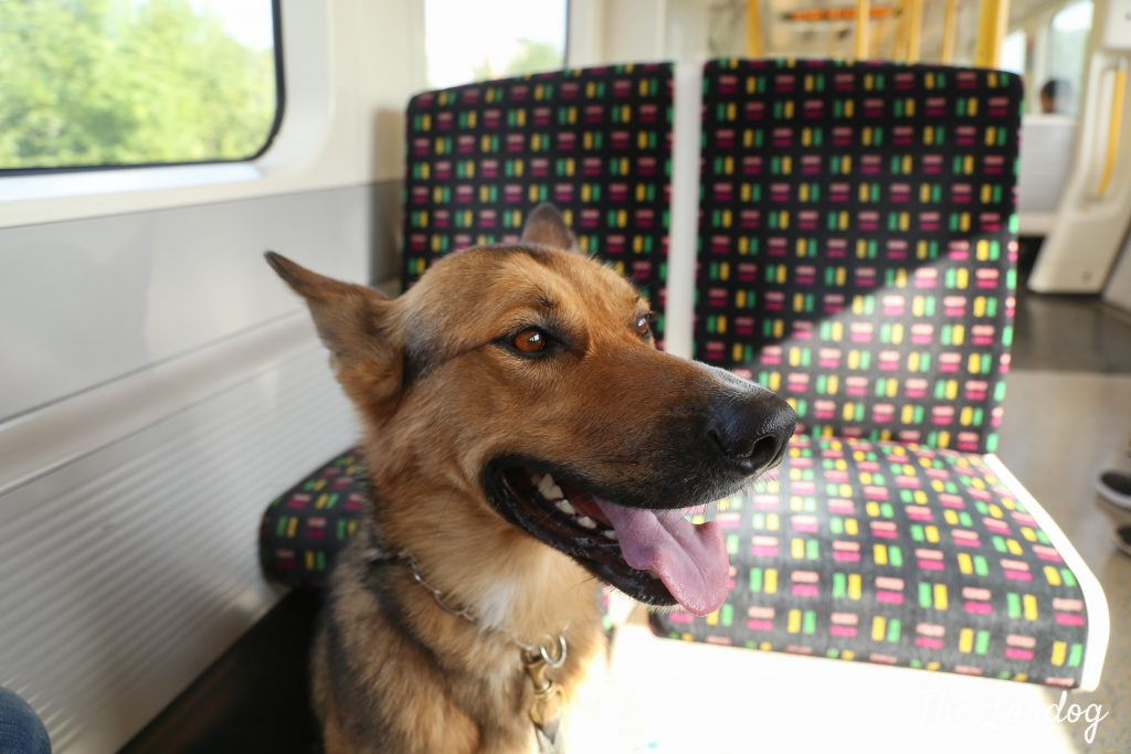 Large dog on tube train
