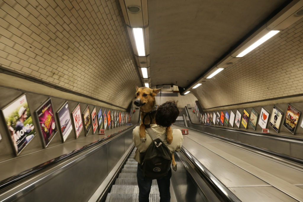 Dog riding on tube escalators in London
