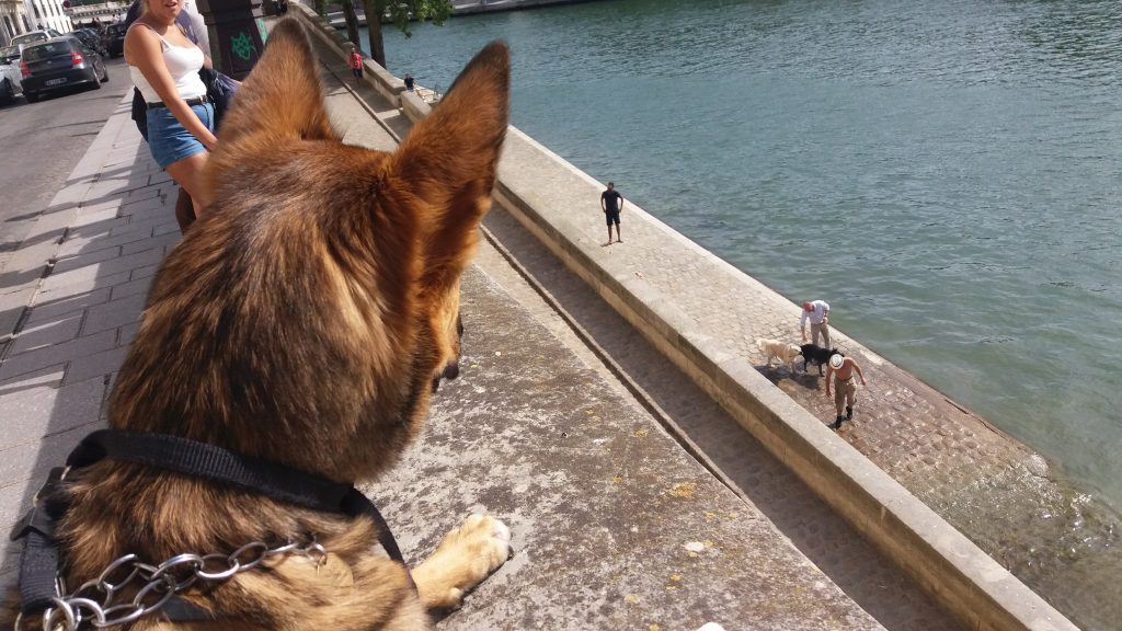 Stalking dogs bathing in the Seine in Paris