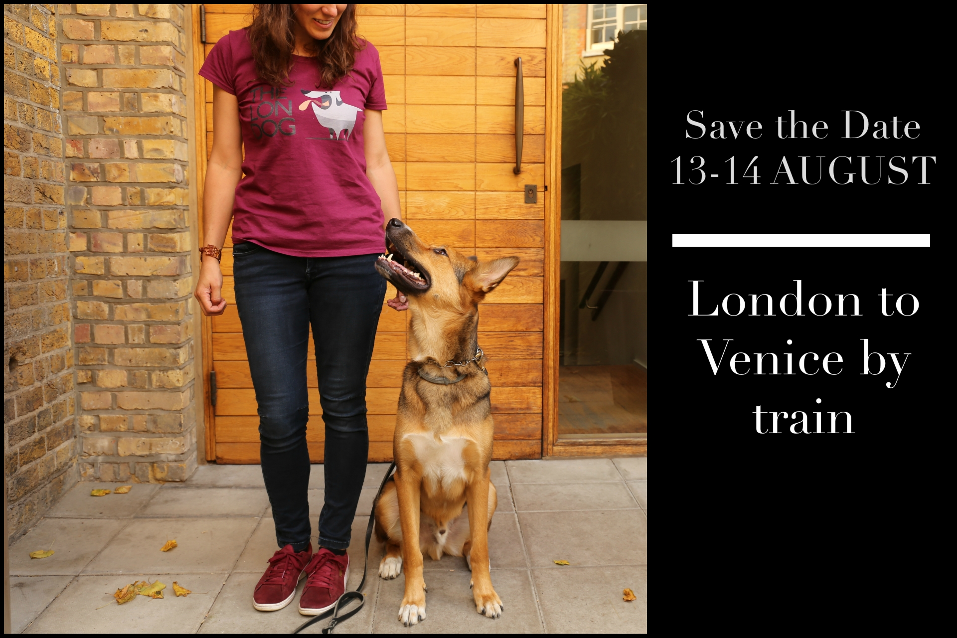London to Venice by train with a dog. Argo the londog looks up