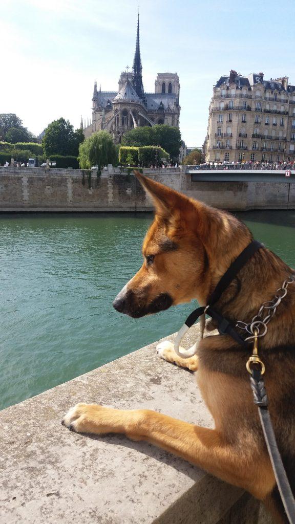 Argo Notre-Dame Paris