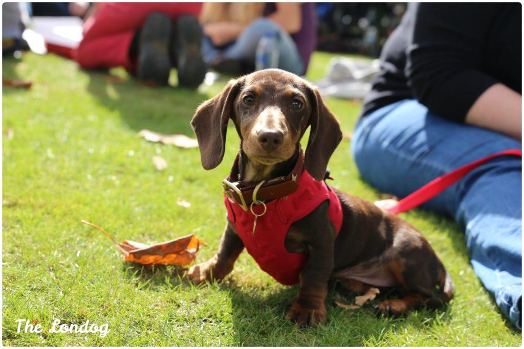 Chiswick dog