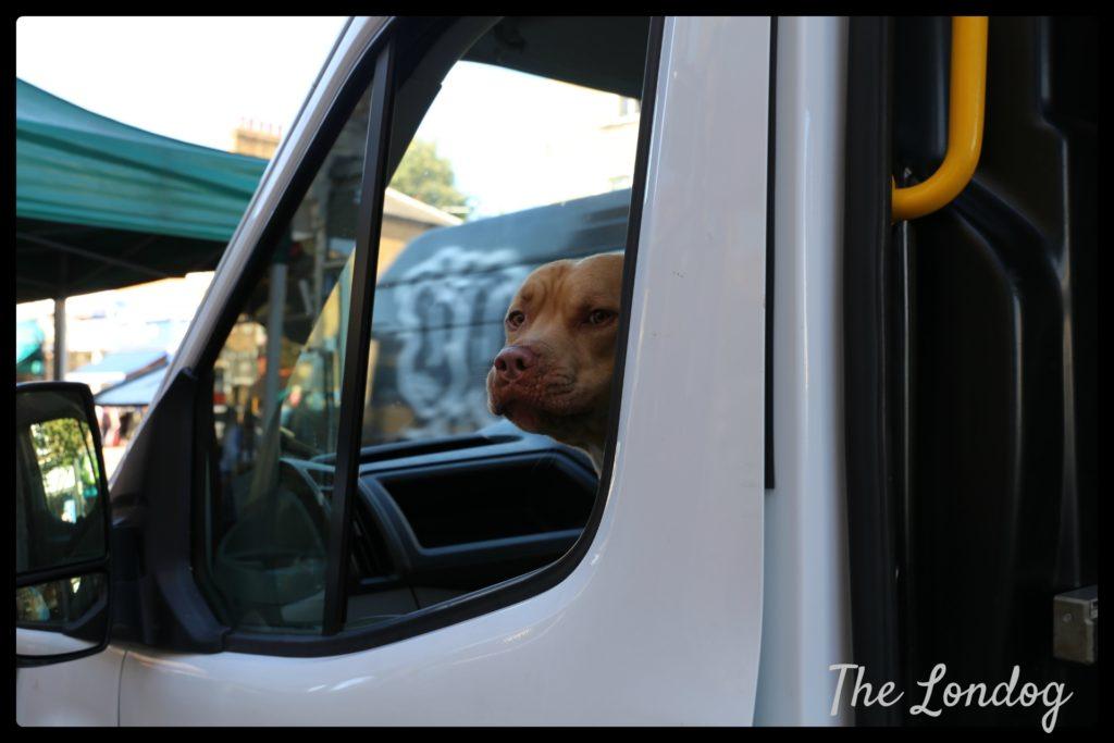 dog-in-van