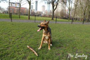 Dog area Sir McDougall Gardens