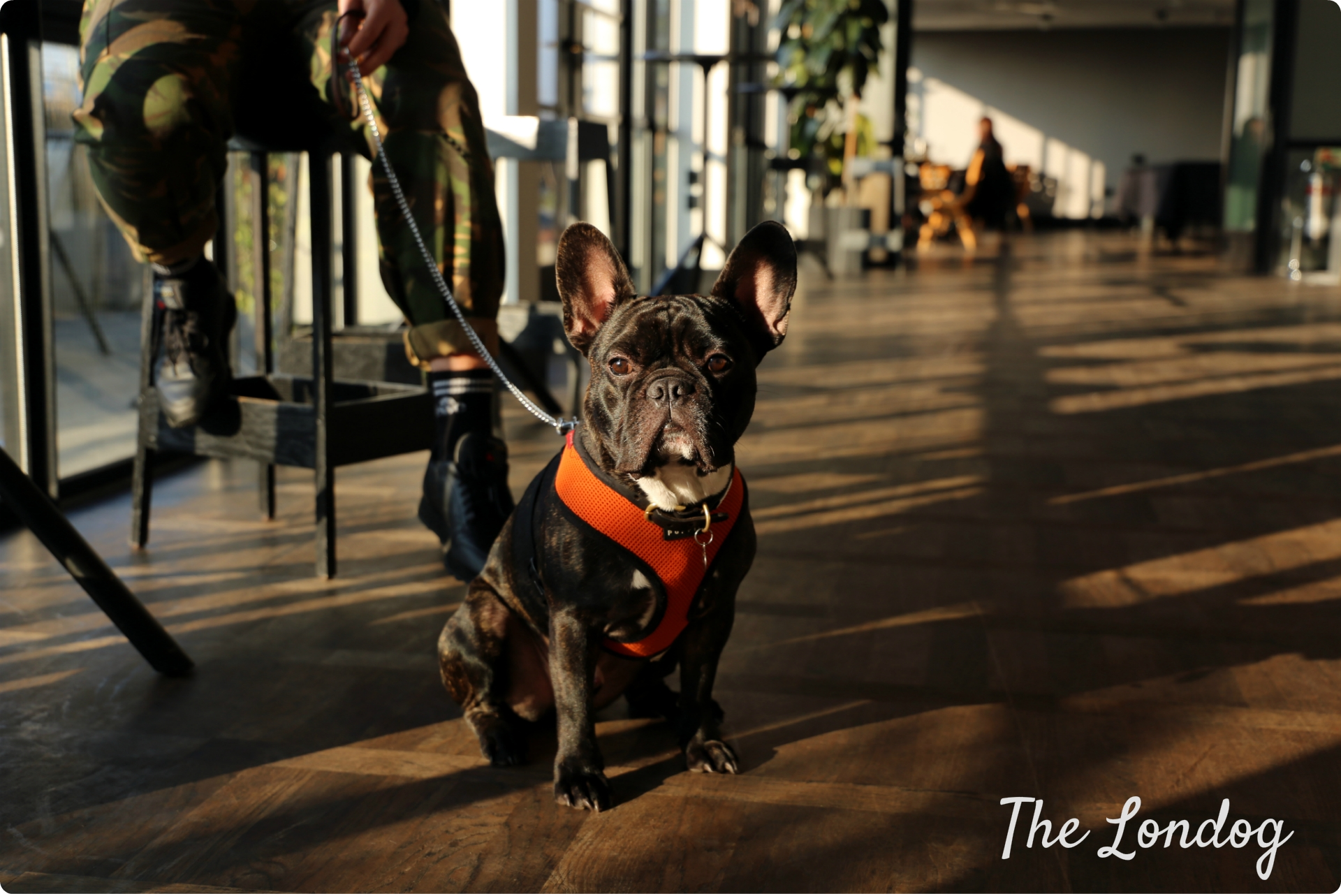 Frenchie at the Ace Hotel Shoreditch rooftop