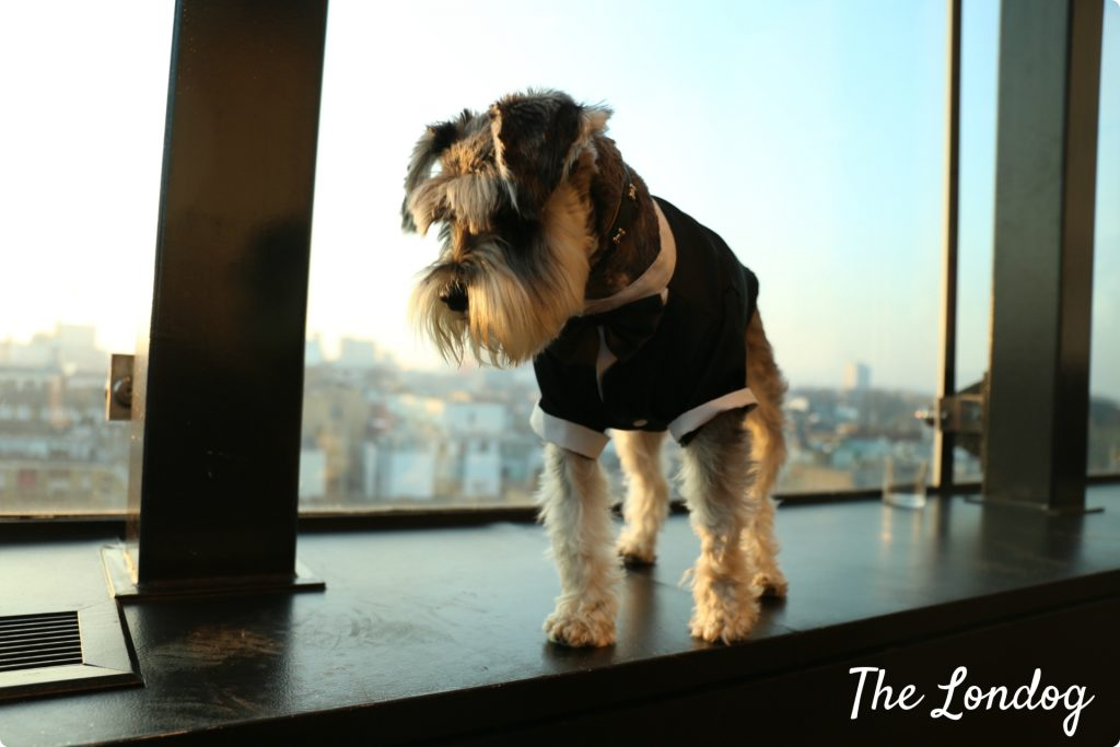 dogeatdog24