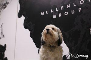 Molly MullenLowe Profero