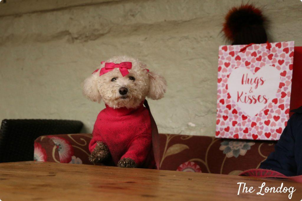 Valentines Dog Walk