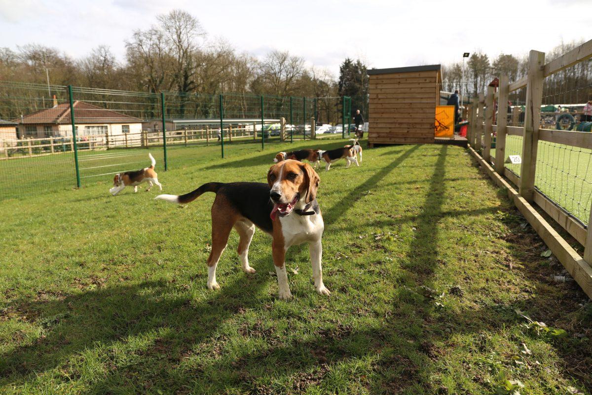 Beagle Bonanza | January 2018 edition