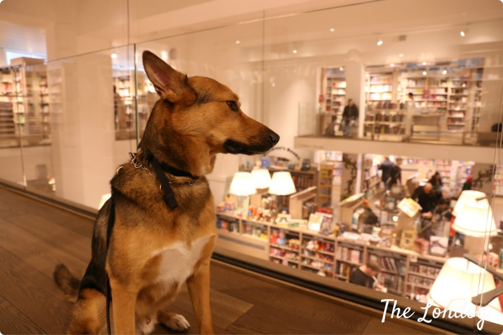 Dog at Foyles store