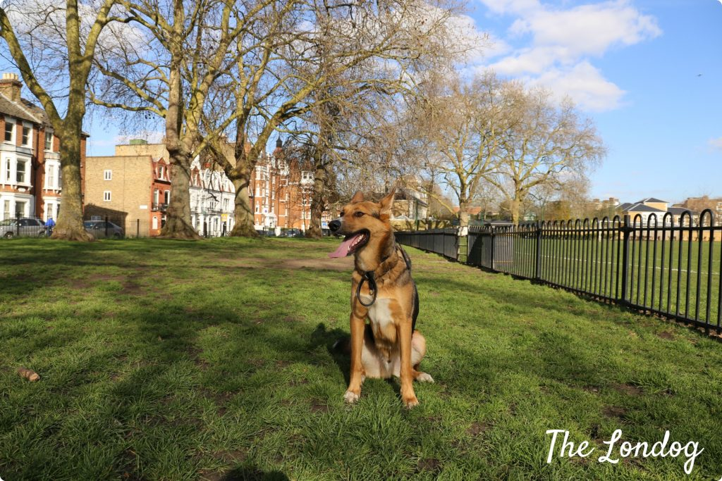 3 London Dog Parks To Visit This Spring The Londog
