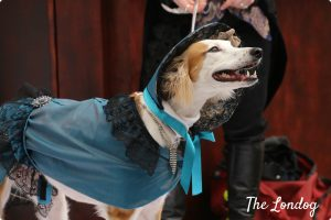 Dog cosplay at the Sci-fido