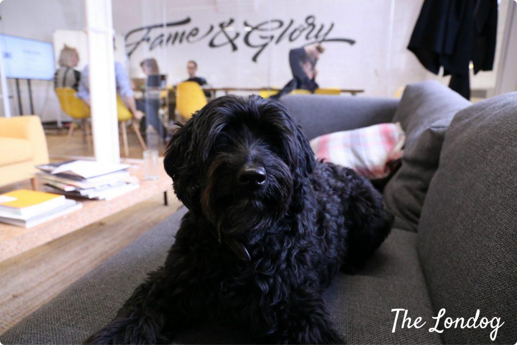 Bert office dog Impero