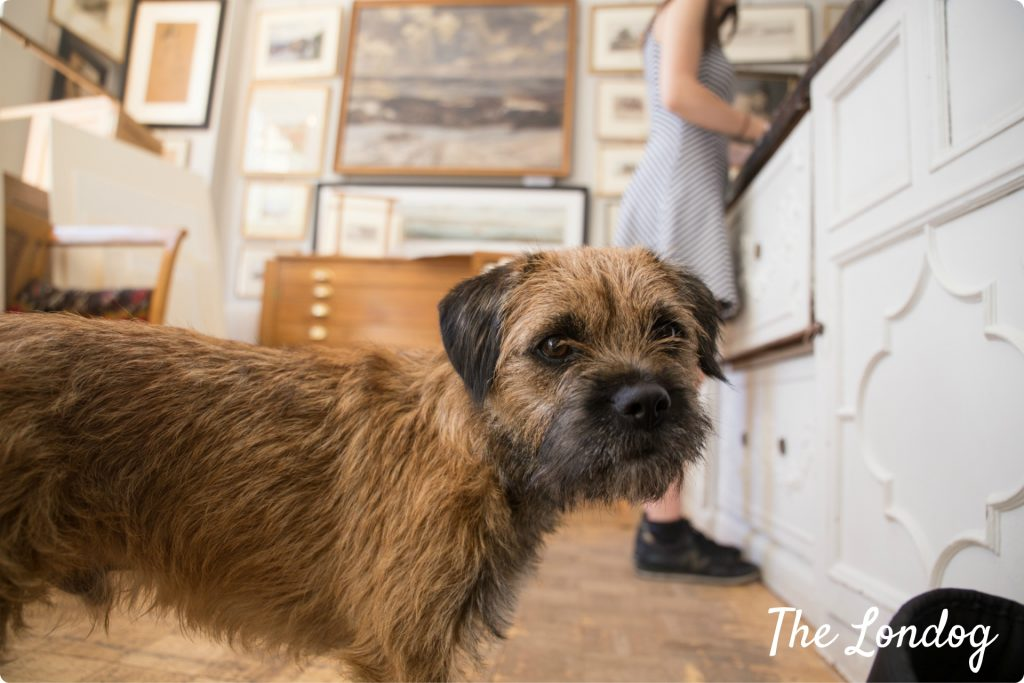 Fraser the gallery dog
