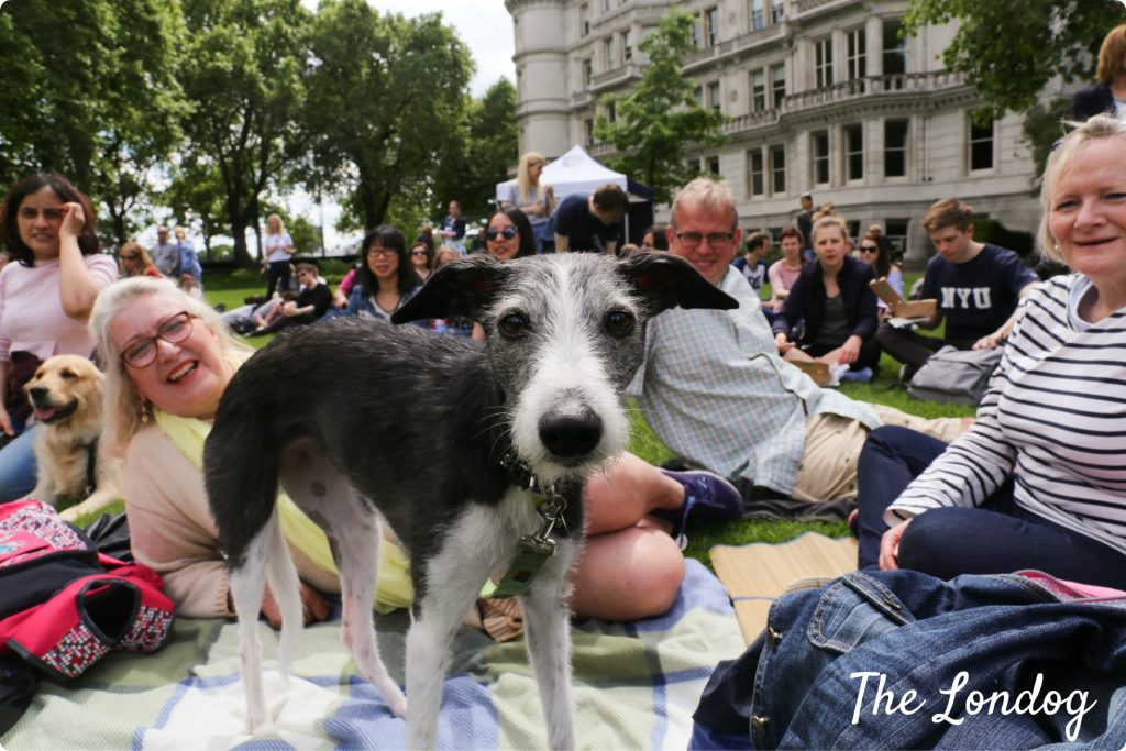 Dog Show In Inner Temple