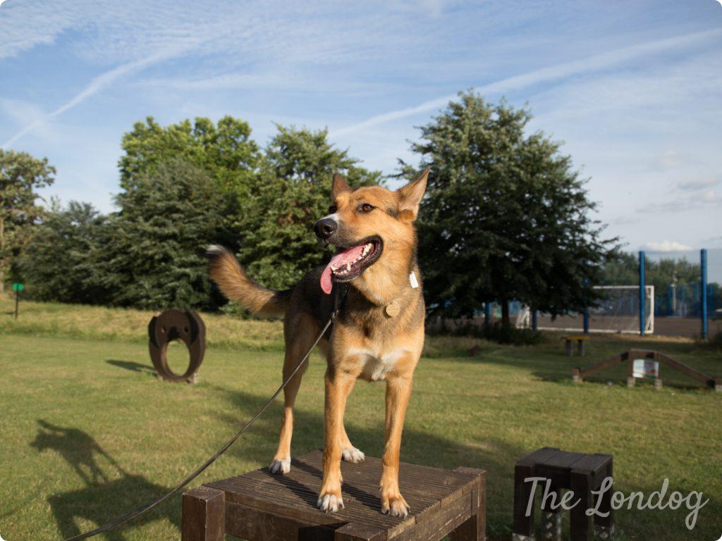 Dog agility London