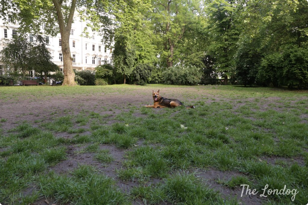 St George Square dog park | The Londog