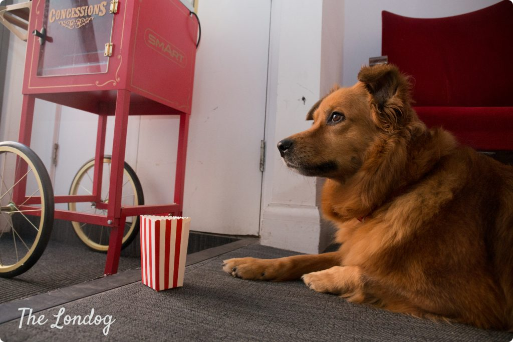 Cujo the office dog of Ignis | TheLondog.com copyright
