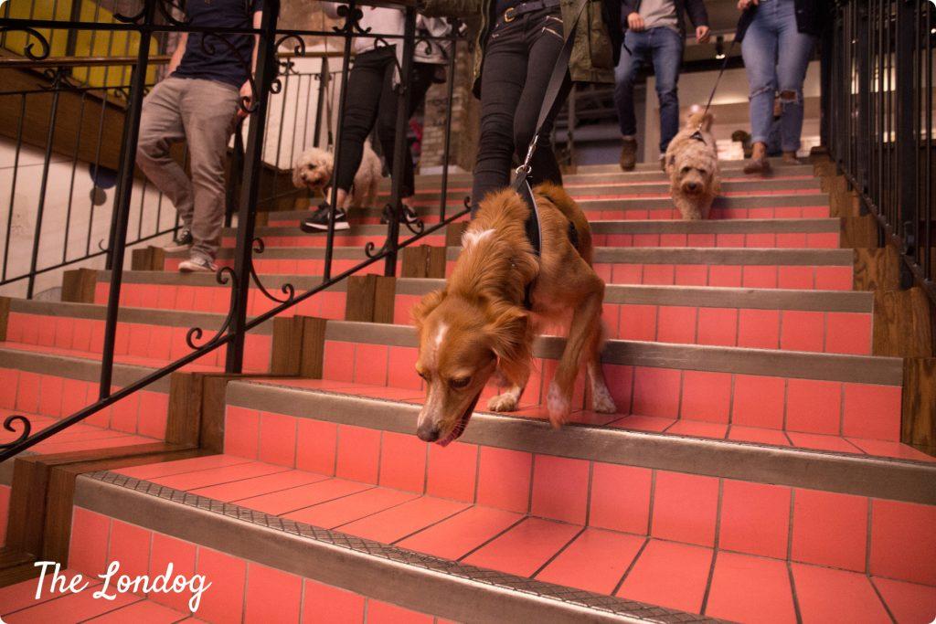 Dog-friendly cinema | TheLondog.com copyright