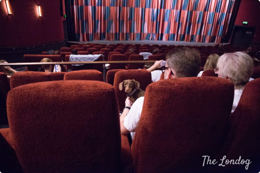 Dog at dog-friendly cinema screening at Picturehouse Central in London