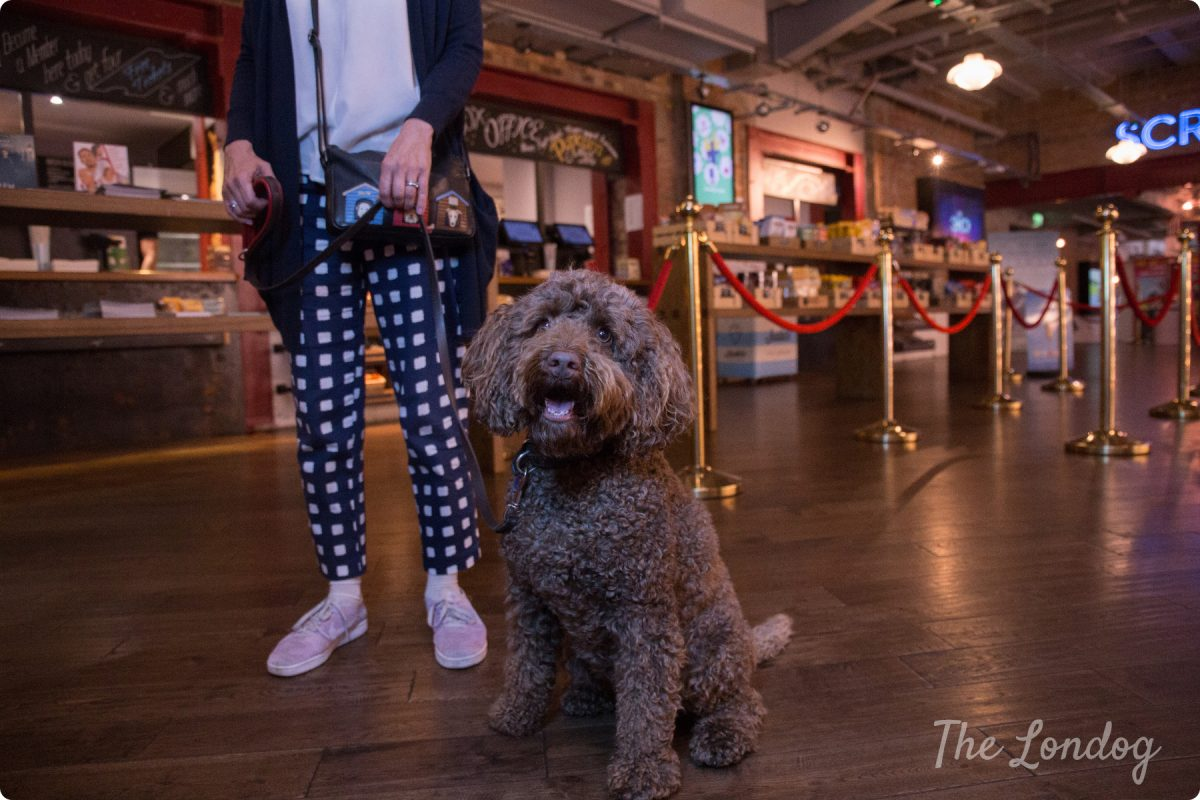 """Dog-friendly Cinema Preview Screening of """"Isle of Dogs"""" @East Dulwich Picturehouse"""