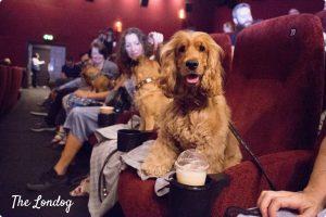 Dog at the cinema