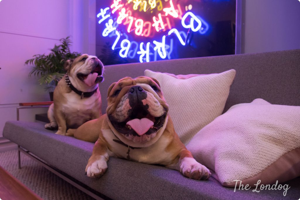 George & Harrison office dogs   TheLondog.com copyright