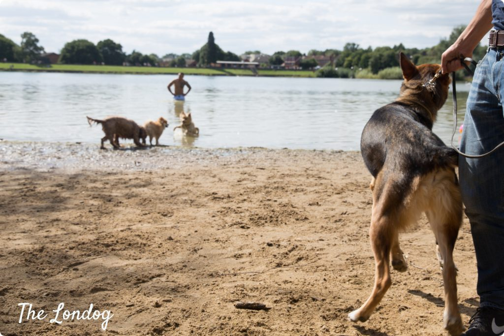 Ruislip Lido dog beach | TheLondog.com copyright