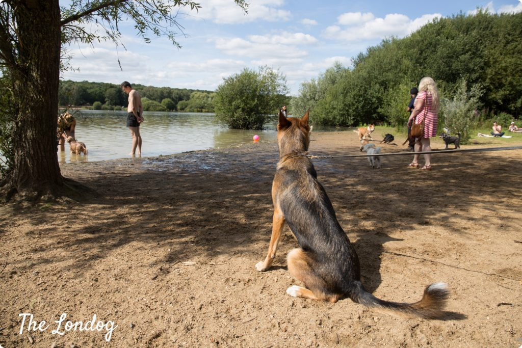 Ruislip Lido dog beach