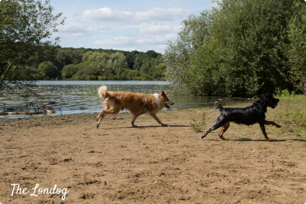 Dog beach London