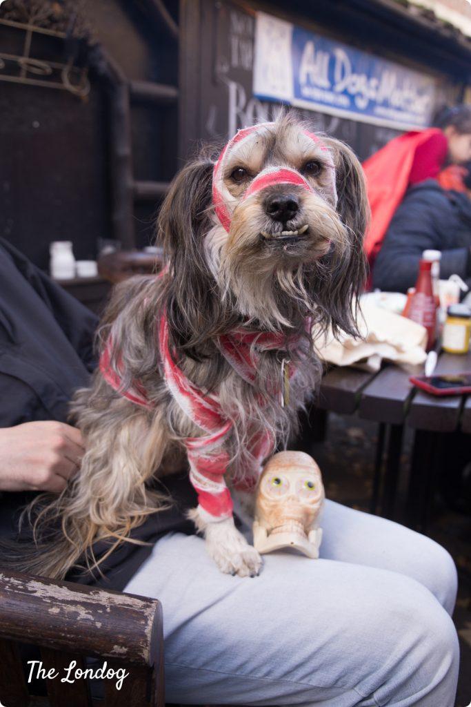 Gustavito Halloween dog