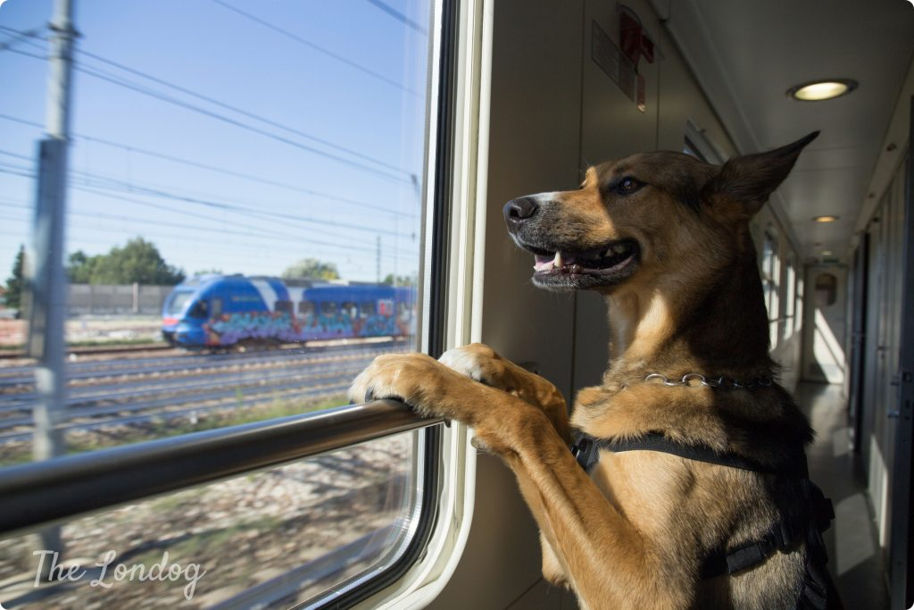 Dog on Thello train | The Londog