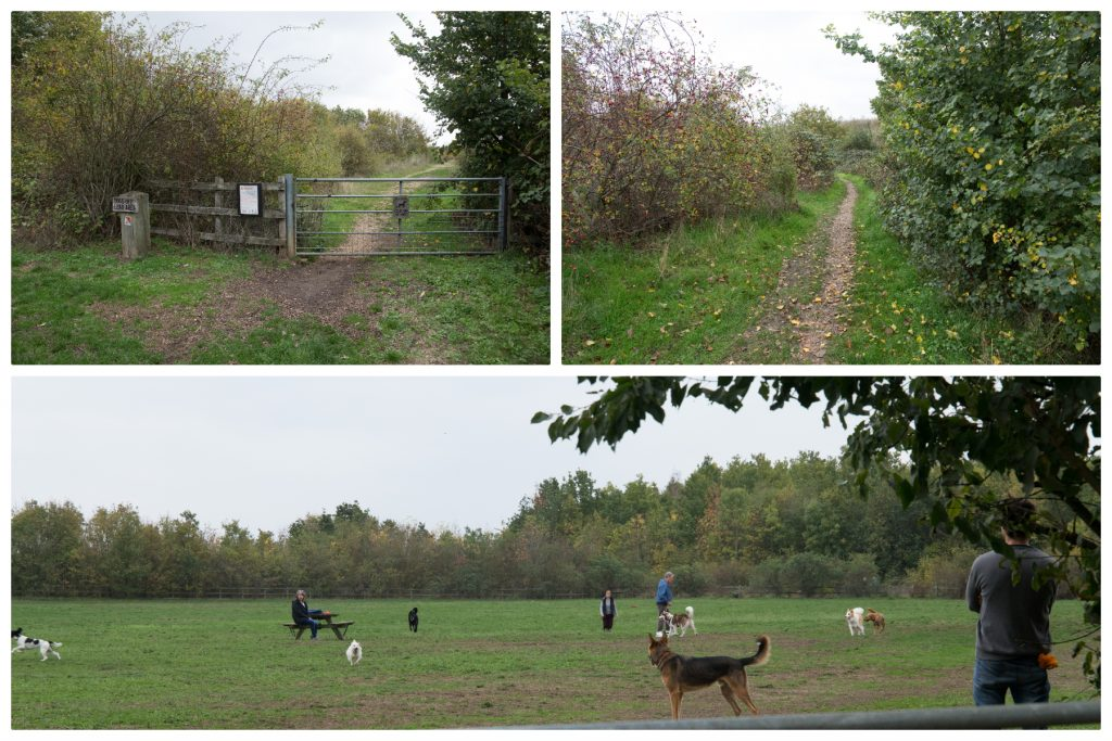 Collage of photos from Bedfont Lakes Country Park dog exercise area
