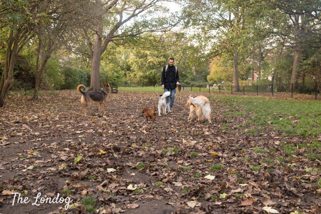 Bishop's Park dog park