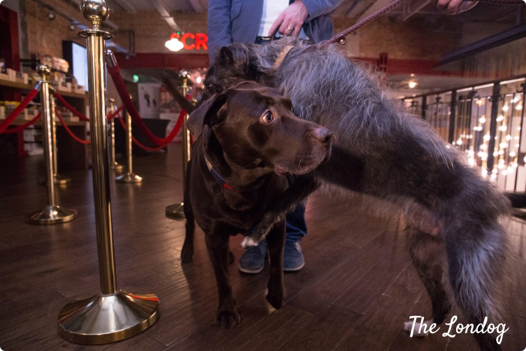 Dogs at dog-friendly cinema London