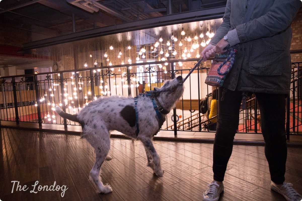 """Dog-friendly Cinema Preview Screening of """"Isle of Dogs"""" @Clapham Picturehouse"""