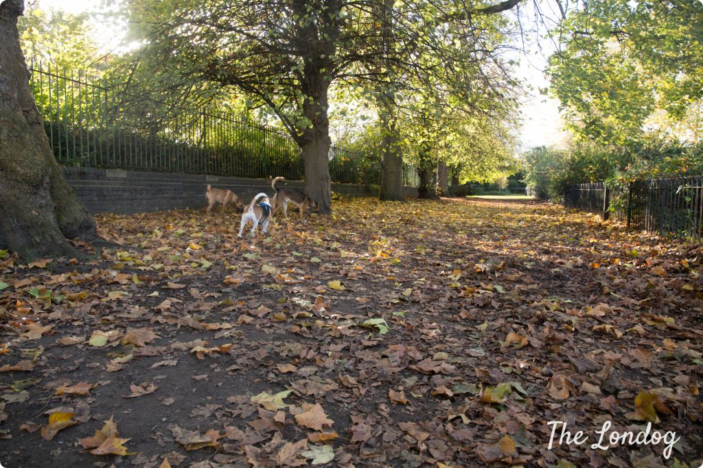 Lillie Road Recreation Ground enclosed dog park