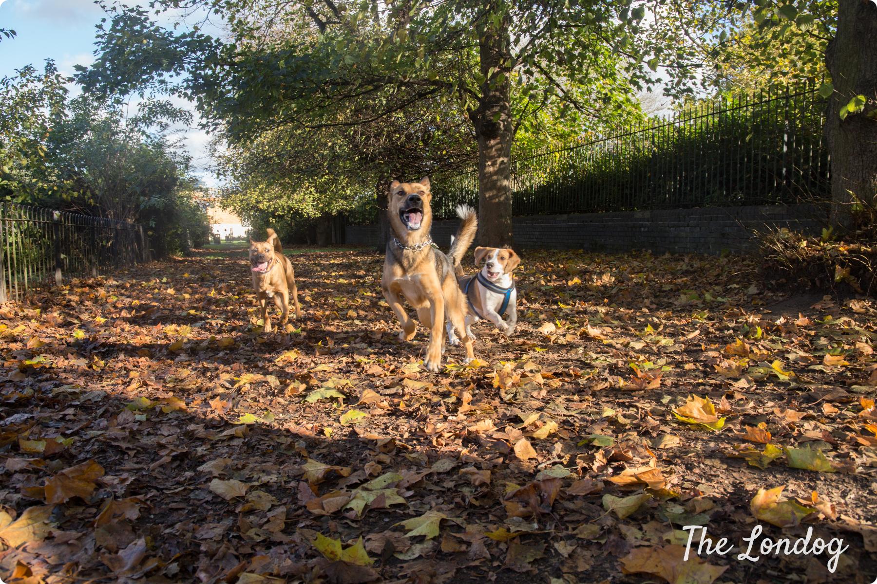 Enclosed Dog Parks The Londog