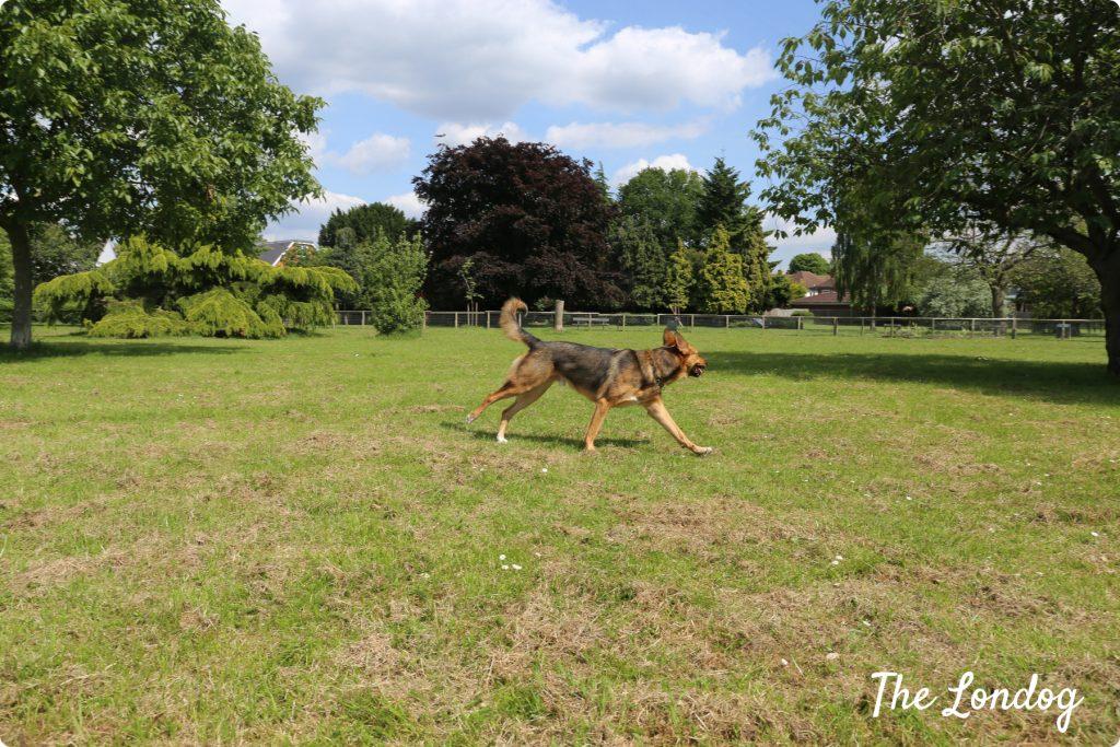 Wolf Fields dog park   The Londog